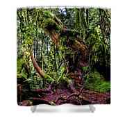 Mossy Forest Shower Curtain by Fabrizio Troiani