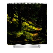 Mossy Forest Path Shower Curtain
