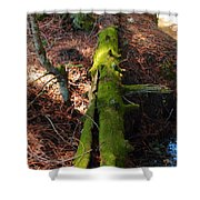 Mossy Log Shower Curtain
