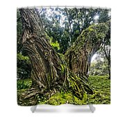 Mossy Old Tree Shower Curtain