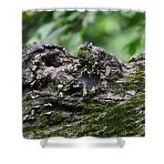 Mossy Tree Knot Shower Curtain