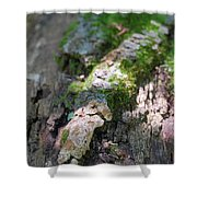 Mossy Tree Shower Curtain