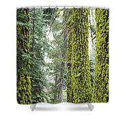 Mossy Trees Shower Curtain