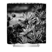 Moth And Flowers Shower Curtain