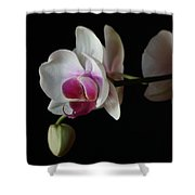 Moth Orchid 1 Shower Curtain