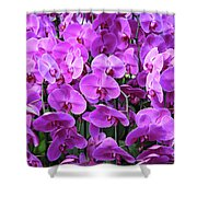 Moth Orchid Exuberance Shower Curtain