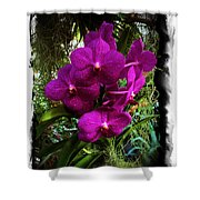 Moth Orchids  Shower Curtain