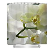 Moth Orchids - White Shower Curtain