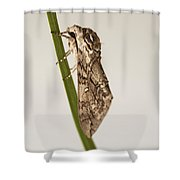 Moth Study 1 Shower Curtain