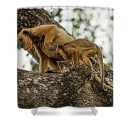 Mother And Baby Black Howler Monkeys Climbing Shower Curtain
