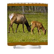 Mother Elk And Fawn Shower Curtain
