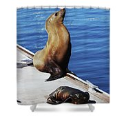 Mother And Baby Sea Lion At Oceanside  Shower Curtain