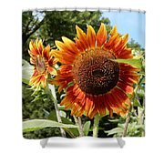 Mother And Daughter Sunflowers Shower Curtain