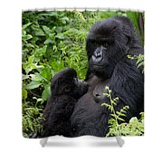 Mother And Suckling Baby Gorillas Shower Curtain