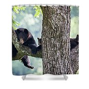 Mother Bear And Cubs Shower Curtain