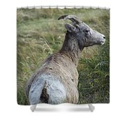 Mother Bighorn Shower Curtain