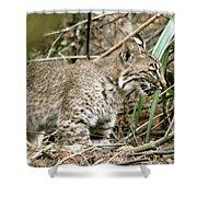Mother Bobcat Shower Curtain