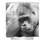 Mother Gorilla In Thought Shower Curtain
