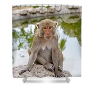 Mother Monkey Shower Curtain