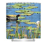 Mother Moorhen Shower Curtain