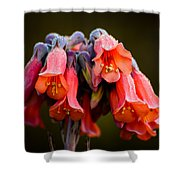 Mother Of Thousands Shower Curtain