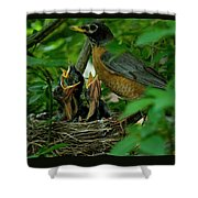 Mother Robin And Her Young Shower Curtain