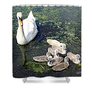 Mother Swan And Baby Cygnets Shower Curtain