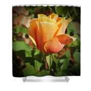 Mother's Rose Shower Curtain