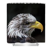 Mottle Shower Curtain by Andrea Silies