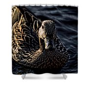 Mottled Duck In Big Spring Park Shower Curtain