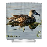 Mottled Duck Shower Curtain