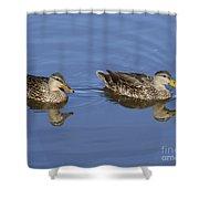Mottled Ducks, South Padre Island, Texas Shower Curtain