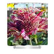 Mottled Pink Cone Flower Shower Curtain