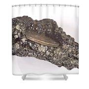 Mount Etna Souvenir Coin In Lava Shower Curtain