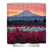 Mount Hood Sunrise With Tulips Shower Curtain