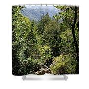 Mount Tamalpais Forest View Shower Curtain