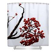 Mountain Ash Shower Curtain