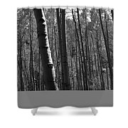 Mountain Aspens Shower Curtain