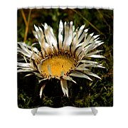 Mountain Thistle French Pyrenees Shower Curtain