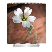 Mountain Beauty Shower Curtain