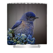 Mountain Bludbird Shower Curtain