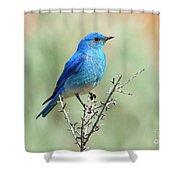 Mountain Bluebird Beauty Shower Curtain
