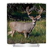 Mountain Buck  Shower Curtain
