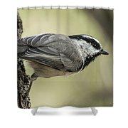 Mountain Chickadee Shower Curtain