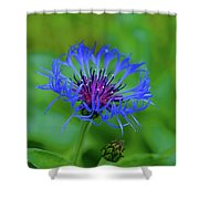 Mountain Cornflower Shower Curtain by Byron Varvarigos