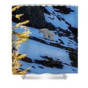 Mountain Goat And Larches Shower Curtain