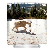 Mountain Goat Crossing A Snow Patch Shower Curtain