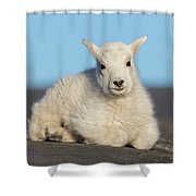Mountain Goat Kid Relaxes In The Road Shower Curtain