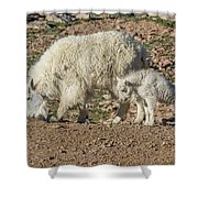 Mountain Goat Kid Stretches By Mom Shower Curtain