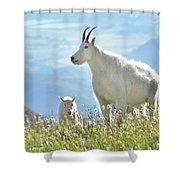 Mountain Goat Momma And Kid Shower Curtain